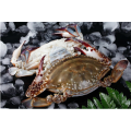Frozen Cooked Swimming Crab