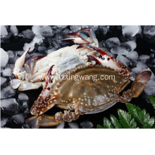 Frozen Swimming Crab Whole Sale