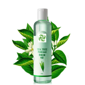 Organic Tea Tree Hydrosol at a bulk price
