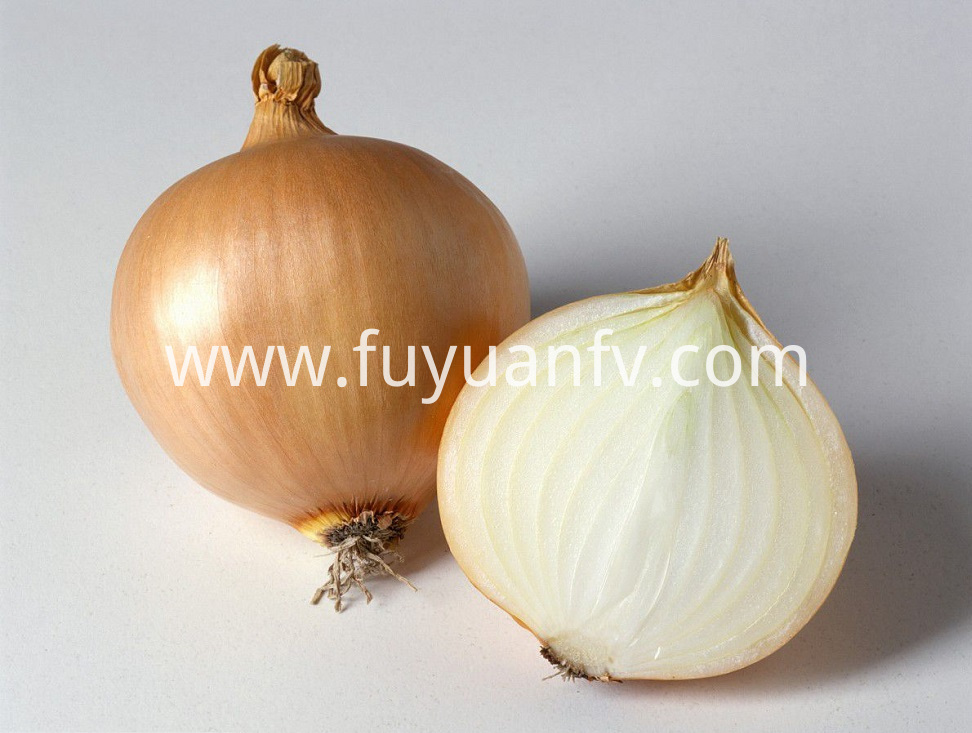 Yellow Onion 14