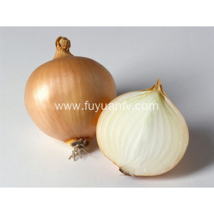 Hot Selling in  Market Yellow Onion