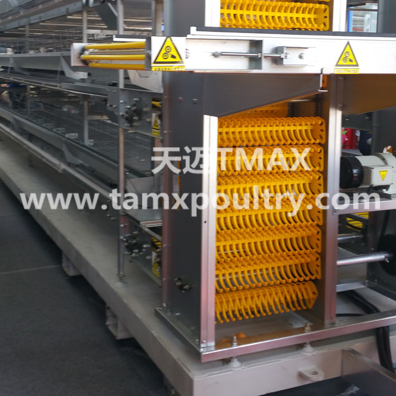 chicken egg conveyor