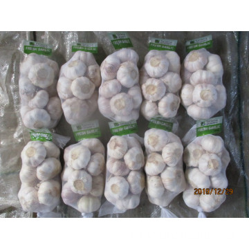 Buy 2019 New Crop Garlic