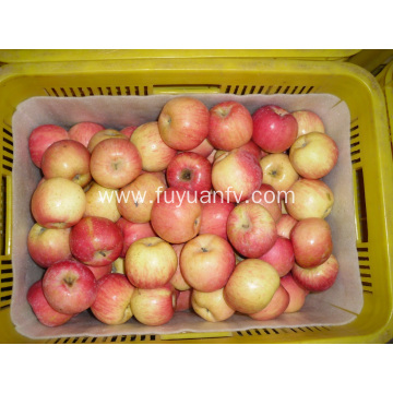 New crop of Fresh Fuji apple
