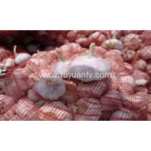 jinxiang new crop Normal white garlic