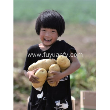 Best price of new crop potato