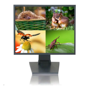19 Inch Quad-Filter Monitor