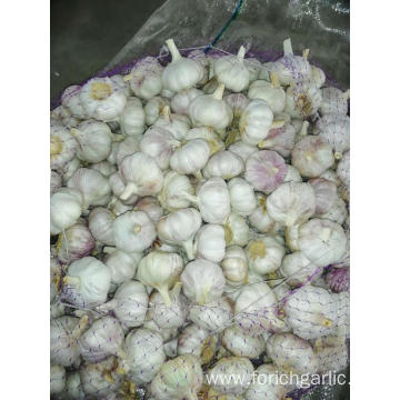 New Season Fresh Garlic 2019