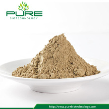 High quality Angelica Root Powder with good price
