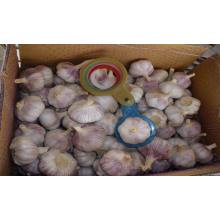 Hot sale good quality for Normal White Garlic 5.5-6.0Cm top quality fresh garlic export to Netherlands Exporter