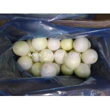 Peeled Gansu Yellow onion