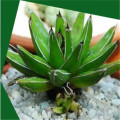 Artificial agave plant pot