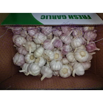 High Quality Fresh Normal White Garlic 2019