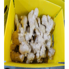 200g top selling air dried ginger