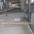 Broiler cage system in Poultry