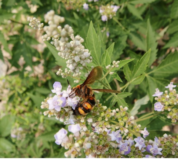 Natural Bee Vitex Honey Healthy Benefits
