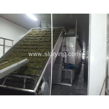Jujube Mesh Belt Drying Machine