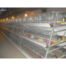 A Type Hen Chicken Equipment