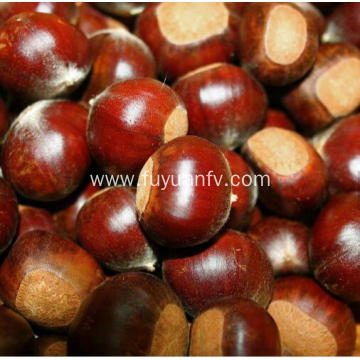 raw chestnut 100% natural