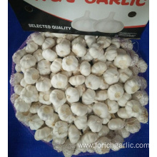 Best Quality Of Jinxiang Pure White Garlic 2019