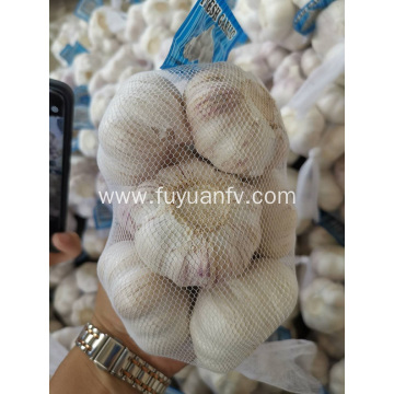 Fresh New Garlic are packing now
