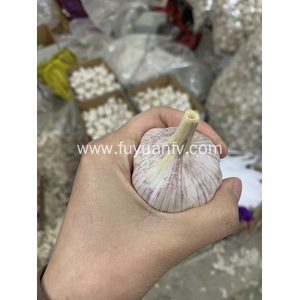small package normal white garlic