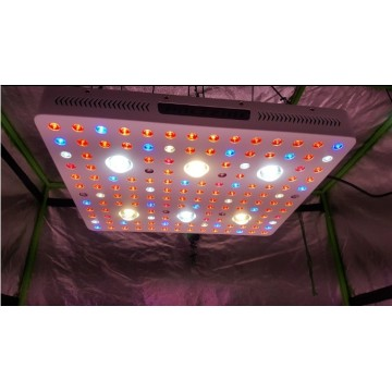 Full Spectrum Cob Cree Led Grow Lights