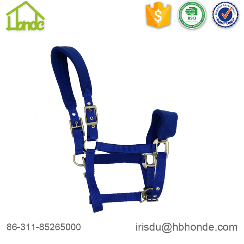 royal blue horse halter