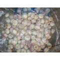 Hot Sale New Crop Garlic 2019