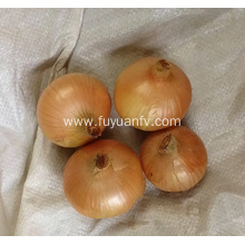Fresh Shandong yellow onion