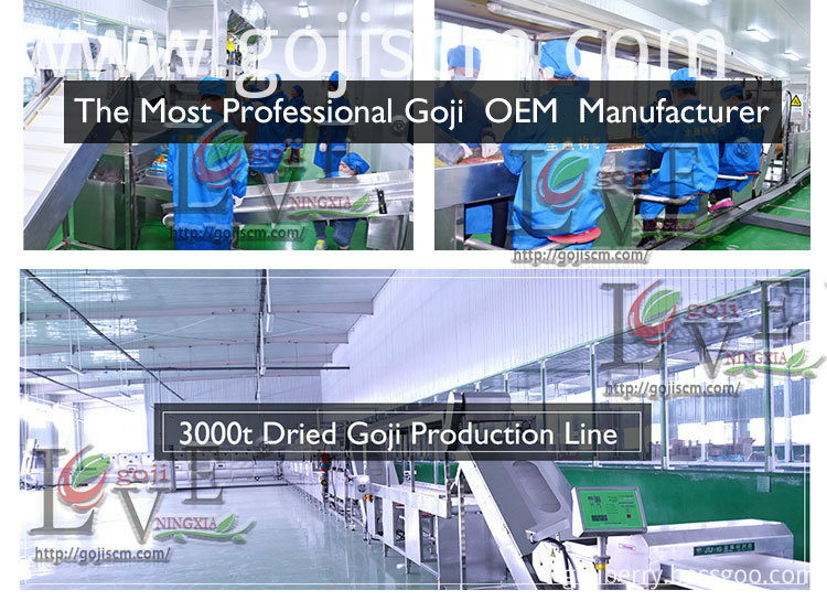 Organic Nutrient Goji Berry production line