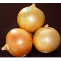 Good Variety Onions for Sale