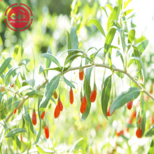 High Quality Tastes Great Chinese Goji Berries