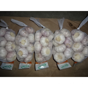 New Season Normal White Garlic