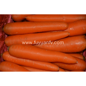 Fresh vegetables carrot factory direct supply