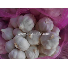 China for Organic Fresh Garlic 2018 new crop of Garlic export to Cocos (Keeling) Islands Exporter
