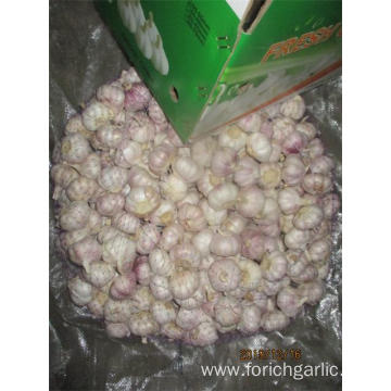 Normal White Garlic Fresh Garlic