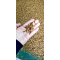 Mealworms rich high quality protein
