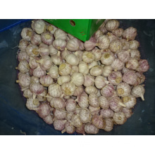Fresh Normal White Garlic Best Quality
