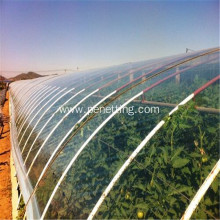 Multi-span Plastic Film Covering Light Tomato Greenhouse