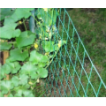 Extruded Plastic Mesh  Agriculture Garden Net