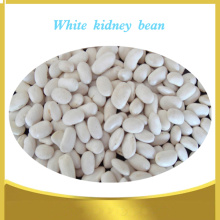 High Quality Navy White  Kindey Beans White