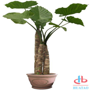 Newest sell artificial pot plant for restaurant decor