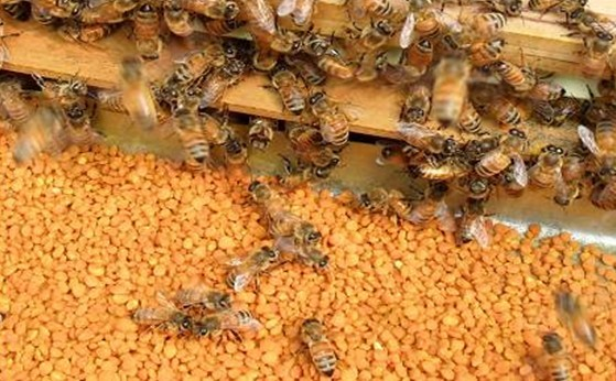 natural and pure BEE POLLEN honeybees