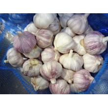 Best Quality Normal Garlic Crop 2019