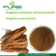 Angelica sinensis Extract Powder /dong quai extract powder
