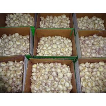 Fresh Normal White Garlic Prices