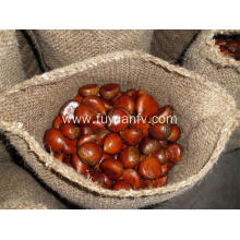 Different Types of Chestnut Fruit
