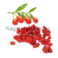 HR Organic Goji berry from Ningxia zhongning