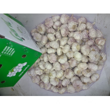 High Quality New Crop 2019 Normal White Garlic